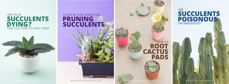 Pin picture examples: Succulent and Sunshine